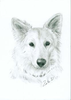Tierportrait vom Tiermaler: Portrait von Ihrem Pferd oder ...